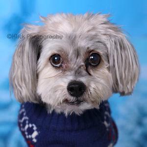A dog Portrait © Klick Photography